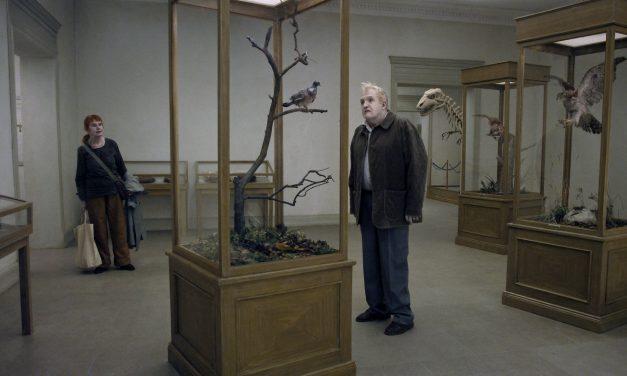 Un piccione seduto su un ramo riflette sull'esistenza
